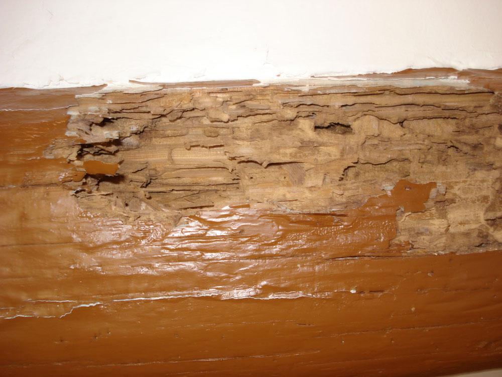 termitas-madera