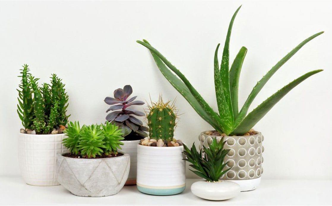 Consejos para limpiar el aire en casa